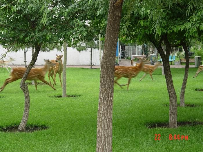 奔跑的鹿| 文旅户外